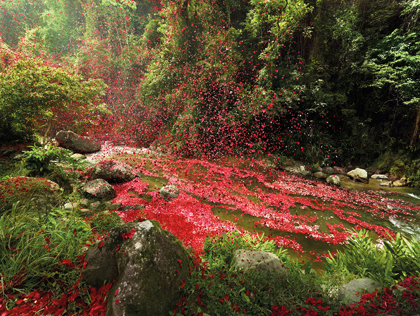 nick-meek-photographs-flower-petals-in-HD-designboom-01