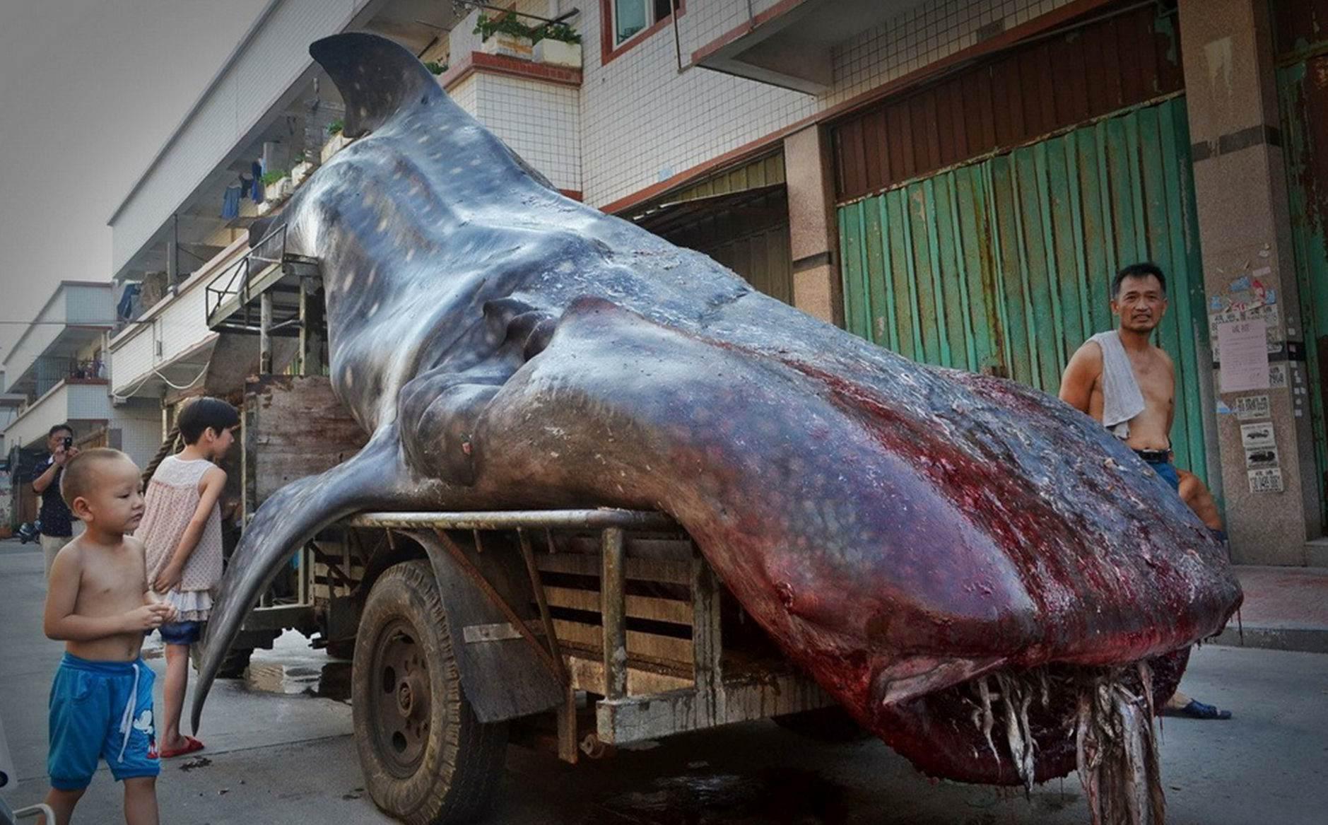 PAY-Whale-Shark