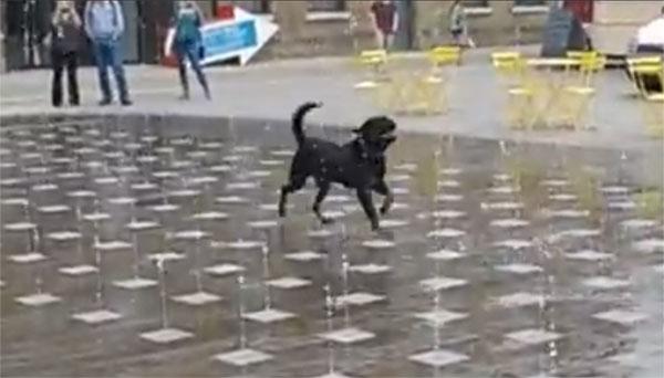 Self Service Dog Wash Waco Tx