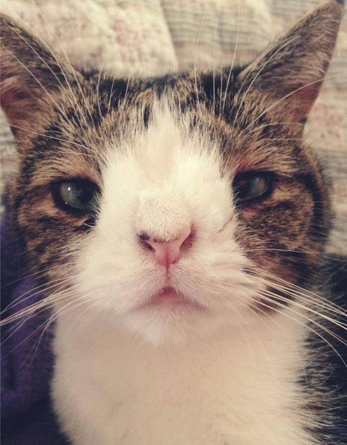 Cory Cat Looks Like Baloon