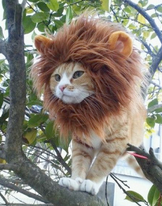 Lion-Mane-Pet-Costume.001
