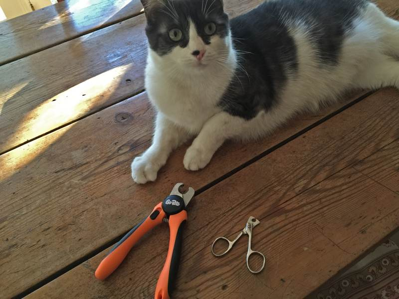 nail-clippers